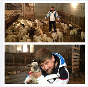 130515_sheep