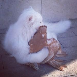 gato paloma